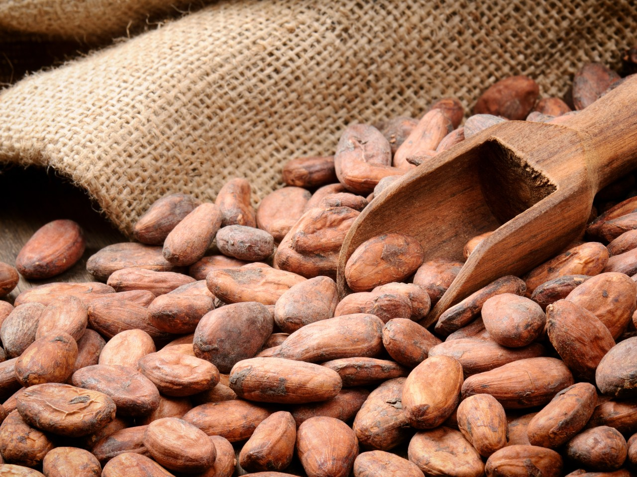 WCF – Global cocoa sector advances effort to sustain industry