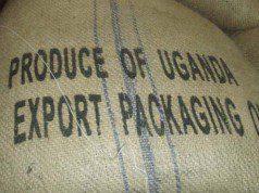 Uganda coffee exports