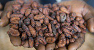 cocoa Fairtrade