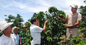 Honduran Farmers