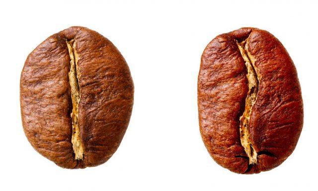 robusta vs arabica