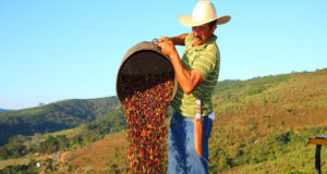 Arabica prices Cepea coffee output Brazilian farmers