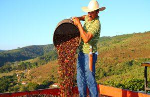 Arabica Brazil prices Cepea coffee output Brazilian farmers