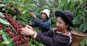 Coffee trading Vietnam