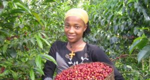 Woman Ethiopia Coffee