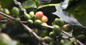 Alameda coffee
