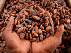 French sustainable cocoa initiative