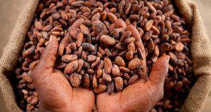 EU cocoa