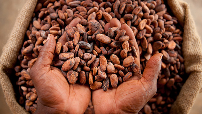 Study suggests transition to responsible, high-quality cocoa production