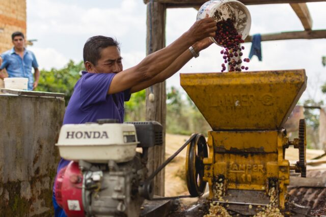 Santos Jimenez Garcia, 65 and a member of the APROCASSI cooperative in Peru, depulps his coffee beans