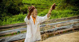 Sucafina coffee farmer