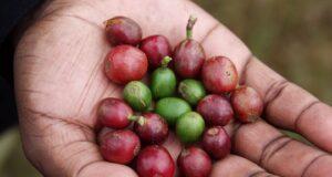 exports coffee