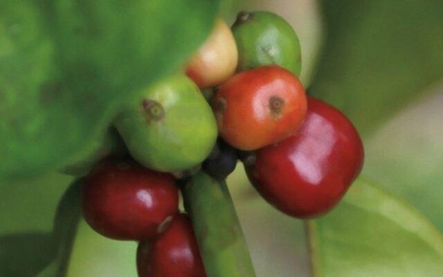 Nespresso Mozambique