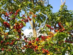 Ethiopian Coffee Promotion