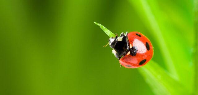 Vittel Act For Biodiversity