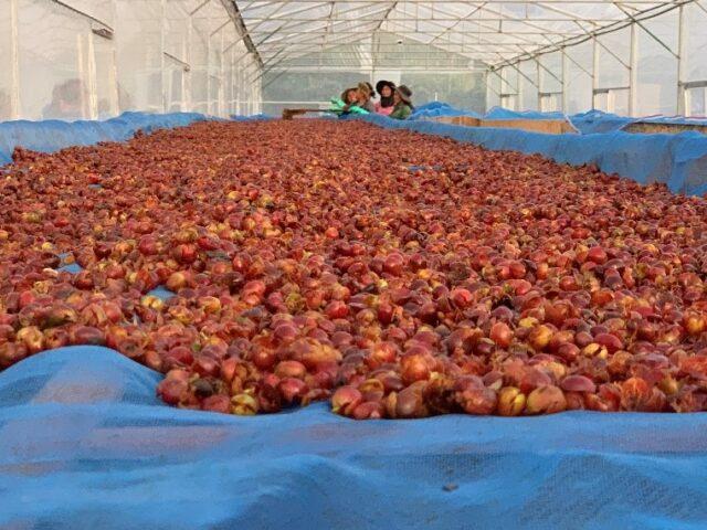 Olam Coffee superfruit