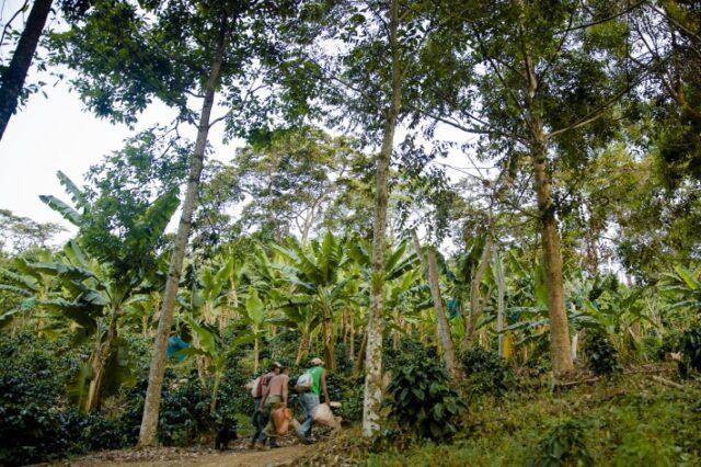 bird watchers shade-grown coffee